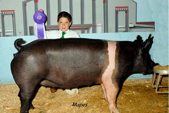 CHAMPION HAMPSHIRE GILT