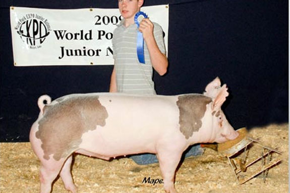 CLASS WINNING CROSSBRED BARROW