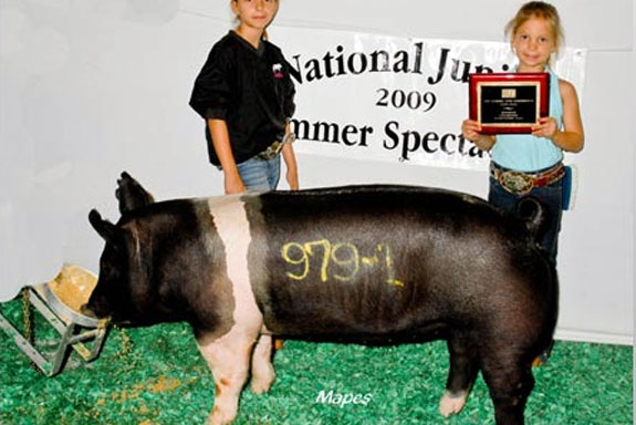 RESERVE CHAMPION HAMPSHIRE GILT