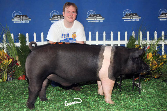 CHAMPION FFA HAMPSHIRE BARROW