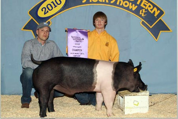 CHAMPION HAMP & RES GRAND CHAMPION OVERALL