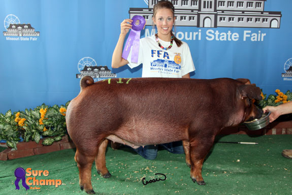 CHAMPION FFA & RESERVE OPEN DUROC BARROW