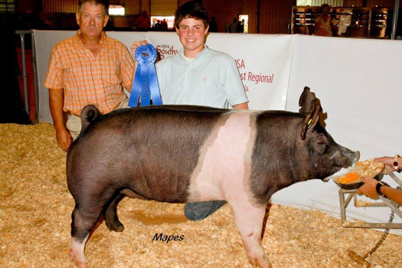 CHAMPION HAMP GILT, Reserve Champion Hamp Gilt
