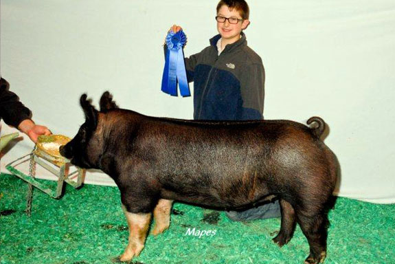 RESERVE CHAMPION HAMPSHIRE BARROW