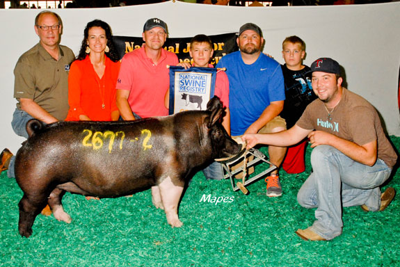 $18,000 CHAMPION HAMPSHIRE GILT