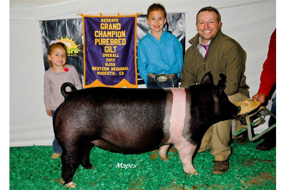 CHAMPION HAMP & RESERVE GRAND PUREBED GILT