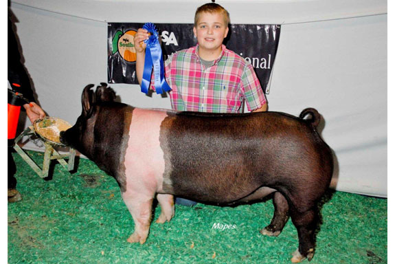 CHAMPION HAMPSHIRE BARROW
