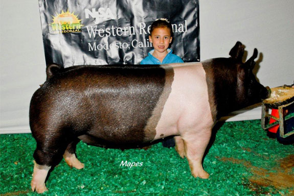 RESERVE CHAMPION CROSSBRED GILT