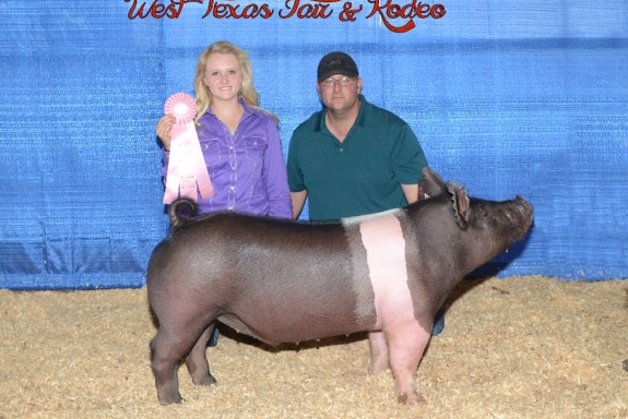 RESERVE CHAMPION HAMPSHIRE