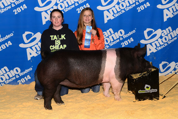 CLASS WINNING HAMPSHIRE GILT