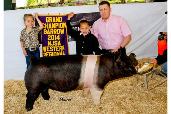 GRAND CHAMPION BARROW baby