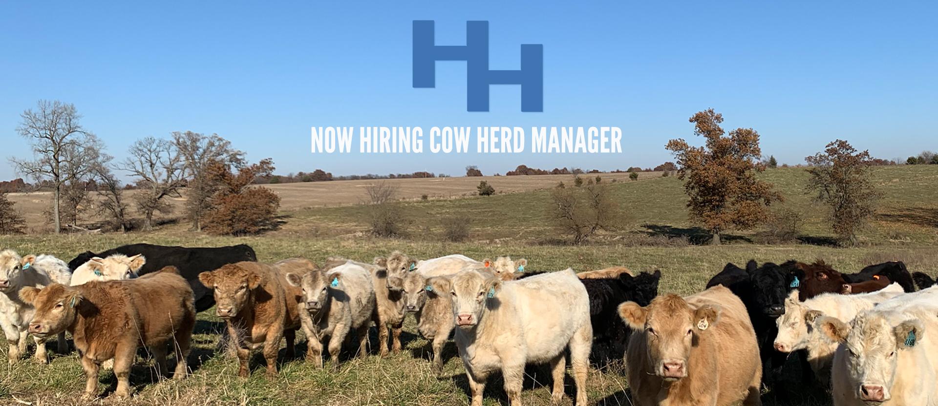 HH Cattle_Slide_website